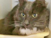 Meet Quibbler, a handsome 7 year old boy looking for a