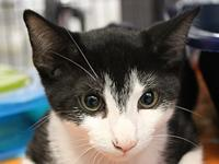 Quicksilver's story I came to Cat Depot with my