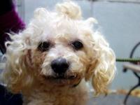 Enchanted is located at Manhattan Animal Care and