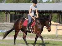 Fancy and quiet Quarter Horse mare. Jana Skiplita, aka