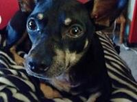 Quincy's story **Quincy is currently being fostered in