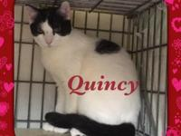 Quick, quick! Come check me out! I'm Quincy, and I came