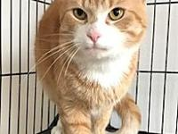 Quincy's story Quincy Age: 2 years old DSH/Neutered
