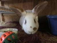 Quincy is a recent arrival at Rabbit Haven. He is about