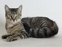 Quinn's story Quinn is an affectionate 1 year old tabby