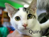 Quinn's story The adoption fee is $85.00 with an