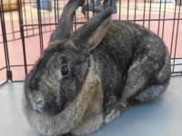 HOP TO IT AND ADOPT QUINNY!Age: 3 yearsSex: Spayed