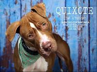 Quixote's story *THIS DOG IS NOT IN THE CARE OF ACE OF