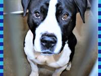 133783 / R219639What a hunk! This beautiful boy is just