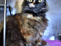 Primary Color: Tortoiseshell Weight: 9.2 Age: 3yrs