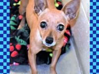 135971 / R220788Dear, sweet, very loving little girl is