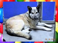 136128 / R220834What a beautiful dog! He came to us as