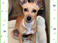 129552 / R220989What a cutie! Zazu is 2 yrs. old & she
