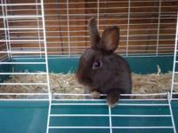 I rescued several rabbits a couple of weeks ago from a