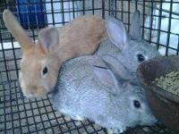 We have a variety of different rabbits for sale. I am