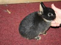 We currently have netherland dwarfs, holland lops, and
