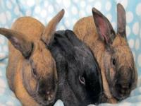I need to rehome all of my parents pet bunnies: --we