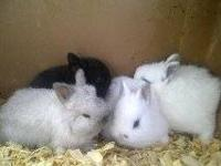 Hey! I have some rabbits for sale. Just call me and you