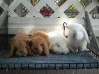 FOR SALE RABBITS,,I AM A MEMBER OF ARBA..AND I DO BREED