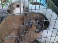 We have several breeds of bunnies for sale . Nothing is