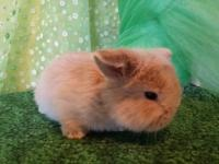 We specialize in small breed rabbits. All of our rabbit