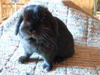 We have several rabbits for sale. We are looking for