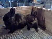 We need to find homes for some rabbits. Need gone