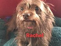 RACHEL's story TO MEET AND FOR MORE INFO CALL NO TEXT