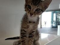 Rafa's story I'm a playful kitten looking for the
