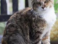 Ragamuffin18's story All Purr Partners Adoptable