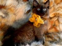 WE HAVE BEAUTIFUL MINKS & SEPIA MINKS TRADITIONALS FOR