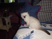 I have 10 beautifull Ragdoll kittens for sale right