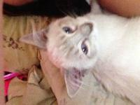 I have 2 male kittens. They were born Feburary 27,