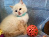 We have a few Christmas Kittens Left. The pics below