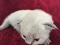 We have the following Kittens that will be ready for
