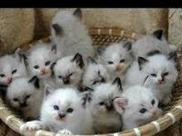 My kittens are potty trained and recent in all health