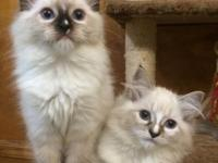 Genotype Cats is a small cattery in Tuscaloosa AL