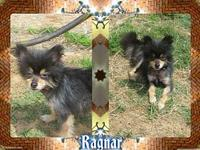Ragnar's story Ragnar, who his foster mom calls Braggs,