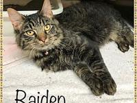My story Meet RAIDEN! This adorable boy found himself
