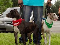 Rain & Wally (Bonded Pair)'s story Sweet Rain and