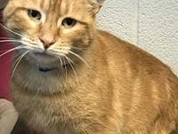 Rainbowie's story Rainbowie is a male orange tabby who