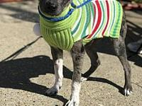 My story Hi!Im Raisin. Im new to the shelter, so my