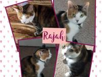 Rajah is loved but in a situation that the owner has to