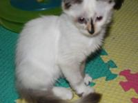 She is $150.00. I have female and male ragdolls. The