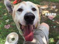 Ralph's story When Ralph first got to the shelter, he