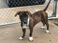 RALPHIE's story City of Tulsa Animal Welfare Tuesday
