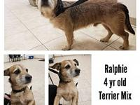 Ralphie's story Found @ 356 Buffalo Rd., Bluff City,