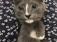 My story This is Ralphie, a 10-12 week old male kitten,