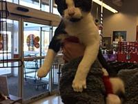 Ralpie's story Hi, I'm Ralphie I am a sweet kitty and