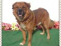 RALSTON's story MEET the handsome RALSTON! Ralston is